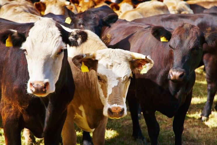 farm bill initiatives