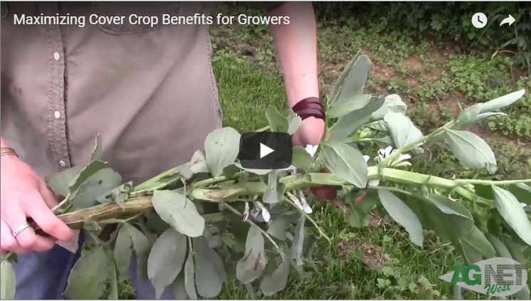 Maximizing Cover Crop Benefits for Growers