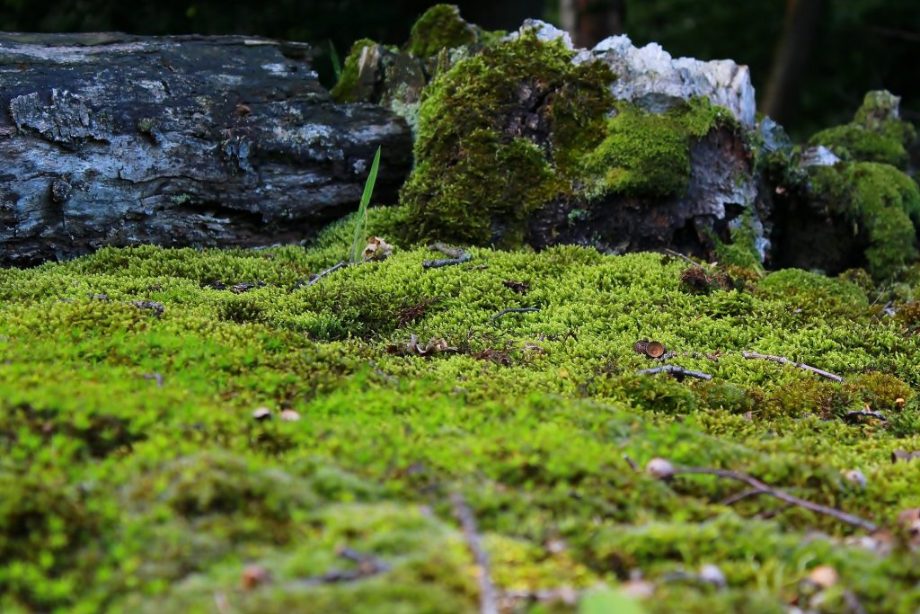 Landscaping With Moss Adds To Your Garden Agnet West