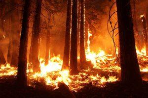 Wildland Fire Subcabinet