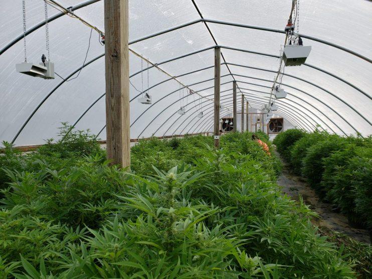 hemp producers
