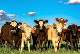 Beef Alliance
