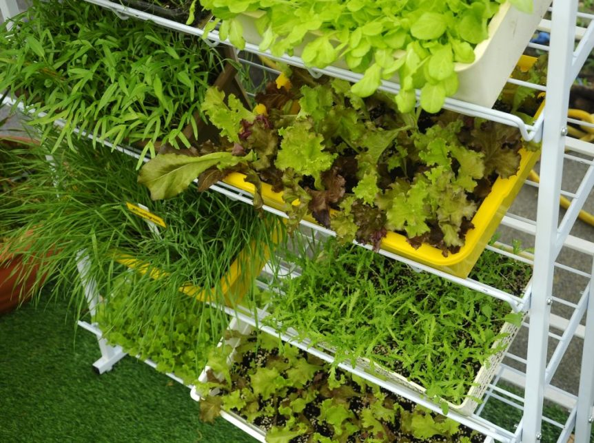 container vegetables