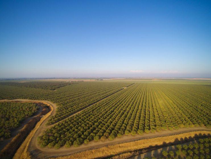 Almond Acreage