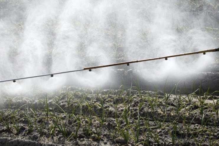 pesticide exposure