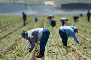 Farmworker Safety Campaign - La Seguridad Empieza con Usted