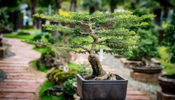 Types Of Bonsai Trees Best For The Beginner