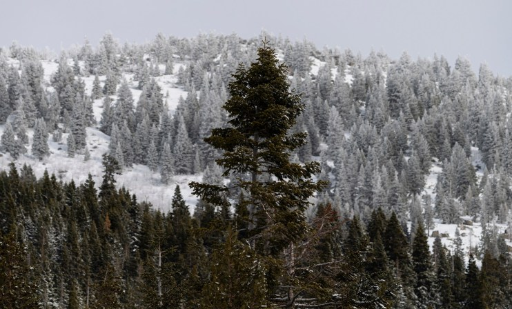 Snowpack Increases