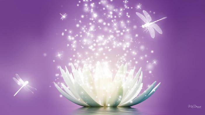 lotus-flower-sparkle-1080p-wallpaper