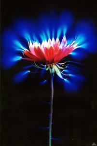 Аура цветка