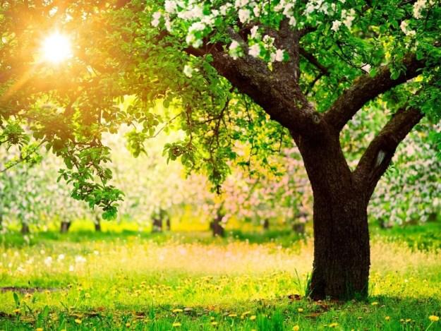обновление жизни агни йога живая этика сегодня шилова записи