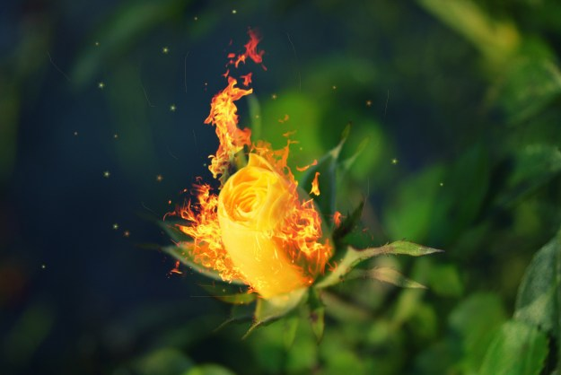 Пусть расцветет огненный цветок
