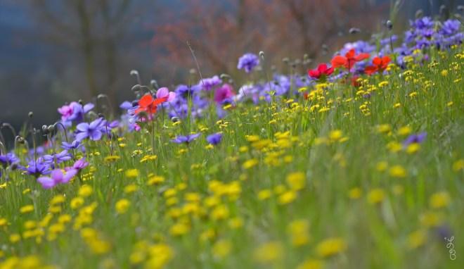 cvety-trava-leto