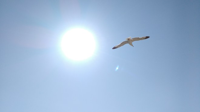 nature-bird-wing-light-sky-seabird-fly-seagull-gull-flight-blue-blue-sky-birds-portugal-sol-day-atmosphere-of-earth-1218935