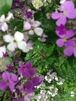 Fleurs mauves