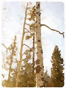 Waterlogue Tall Tree by Karin