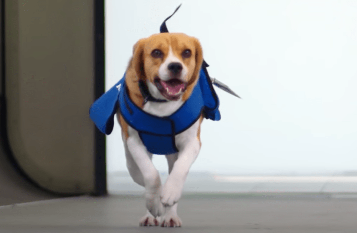 When Dogs Fly… Sort Of