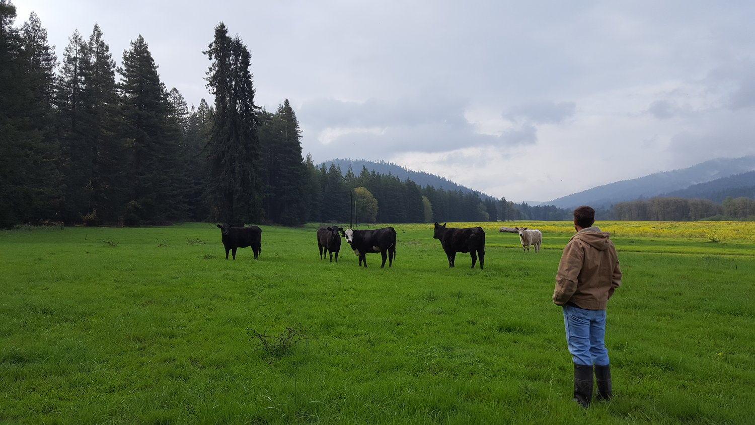 A Guide to Buying Grass Fed Beef