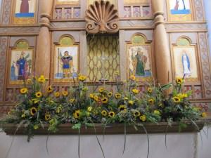 Sunflowers at UNM Chapel