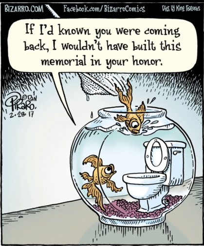 Bizarro goldfish memorial