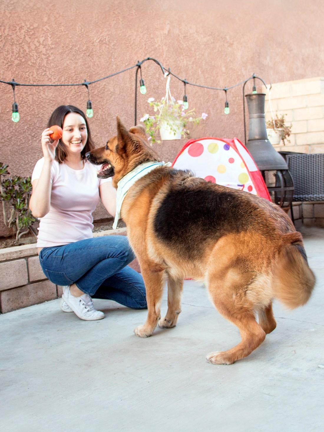 Bonding with German Shepherd Dog | A Good Hue