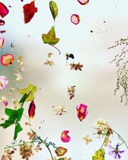 ANN STASIUK Fall Falling 2019