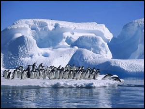 Risultati immagini per polo nord
