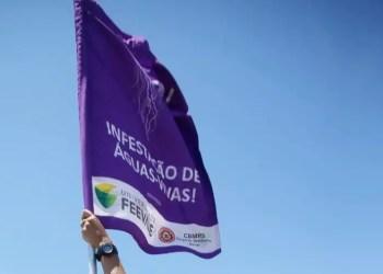 Guarda-vidas usam bandeira na cor lilás para indicar a presença dos animais na água. Foto: Divulgação/CBMRS
