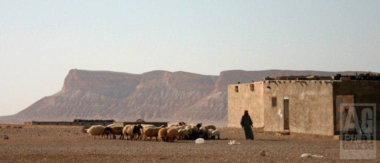 Shepherd in the Syrian Desert