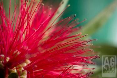 Artistic Macro Flowers