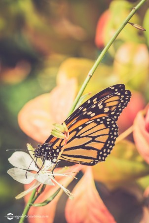 Monarch Butterfly on a Flower with Selective Focus Vertical