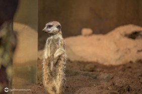 zoo-feb17-01