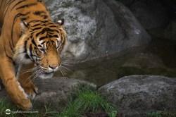 zoo-feb17-08