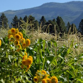Farm Profile: James Ranch