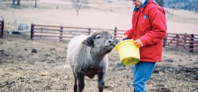 Farming with Spirit
