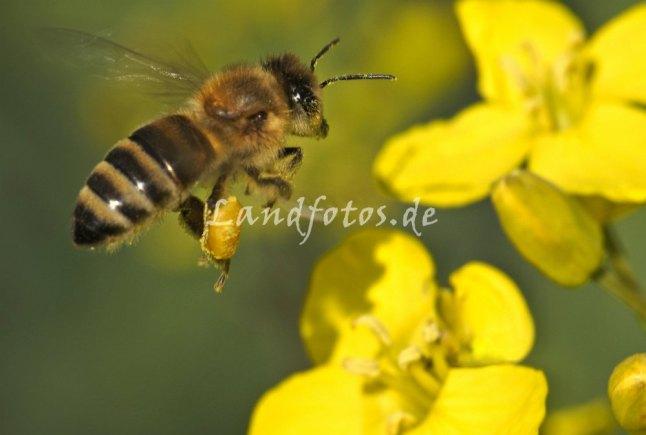 Und auch die Bienen hörte man nach den vielen kalten Tagen zum ersten Mal wieder summen.