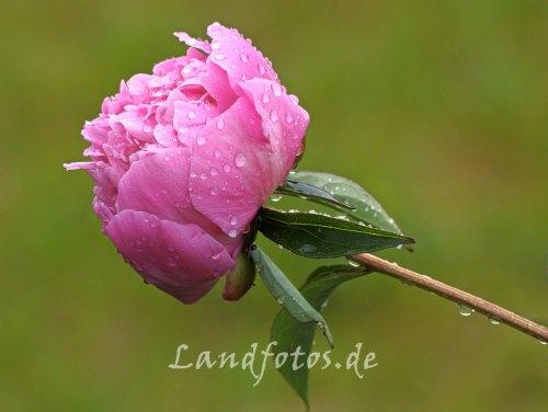 Frohe Pfingsten und einen wohltuenden Landregen :)