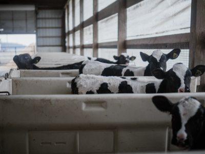 mezőgazdaság állattenyésztés csarnok épület barracon