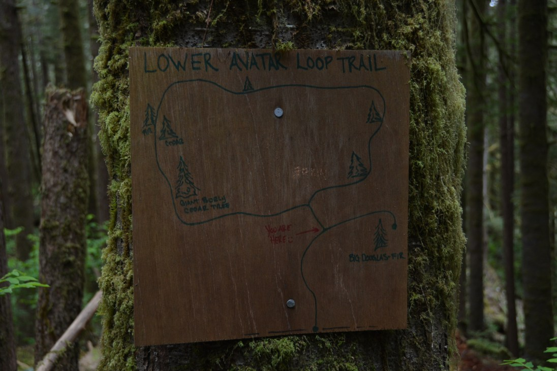 Avatar Grove