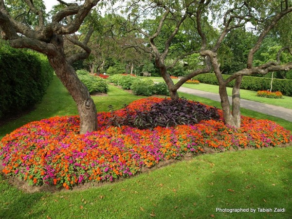 beautiful flower bed landscaping