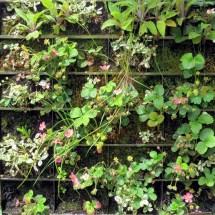 Brilliant Strawberry Garden Ideas - Green Hand