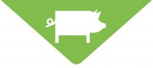 AgriFarmProducts_PigIcon