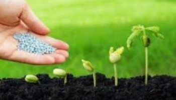 Time and Methods of Fertilizer Application on Crops