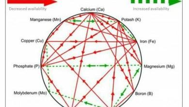 Photo of حركة العناصر داخل النبات ( كيف تضيف العنصر اللازم في الوقت المناسب)