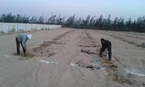 تجهيز الارض لزراعة التين الشوكى