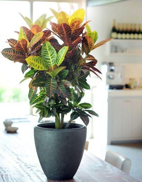 كيفية تسريع نمو النباتات .. مع انواع المغذيات المستخدمة في ذلك