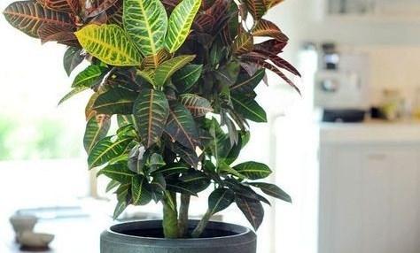 كيفية تسريع نمو النباتات مع انواع المغذيات المستخدمة في ذلك مؤسسة المهندسين الاستشاريين