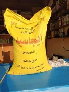 من اصناف القمح في مصر
