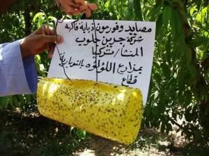 استخدام المصايد في مكافحة ذبابة الفاكهة