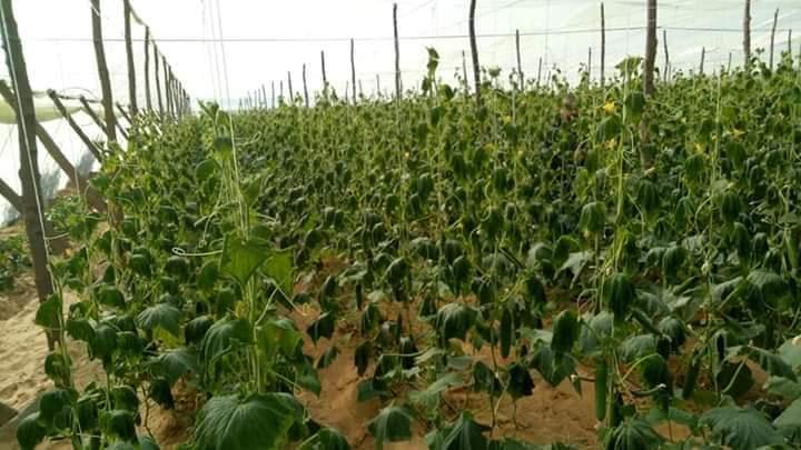 علاج تأثير الصقيع على النباتات وطرق تجنب أضراره عند الحدوث